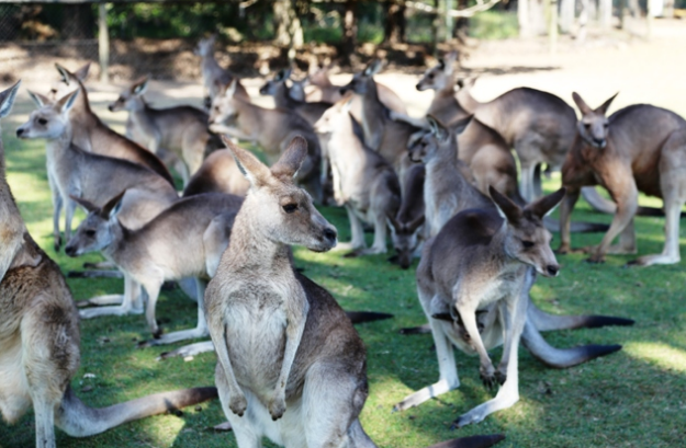 Snap up last minute business class deals so you can visit Lone Pine Koala Sanctuary - IFlyFirstClass